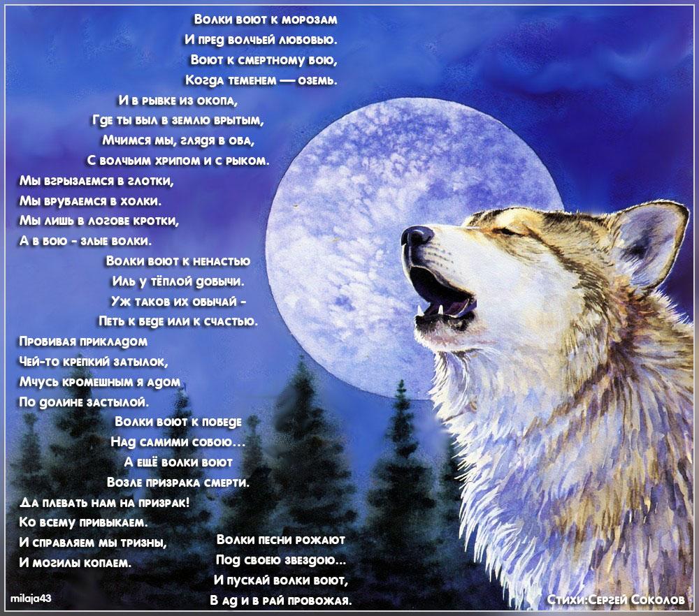 Выли волки на луну стих